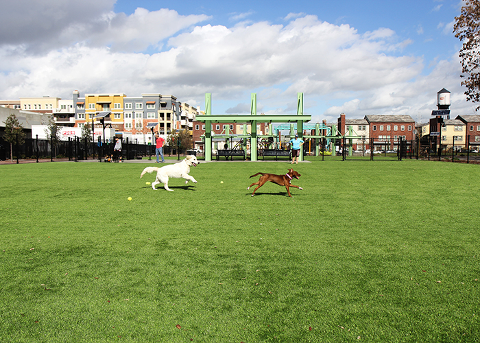 Artificial Grass for Pet Facilities