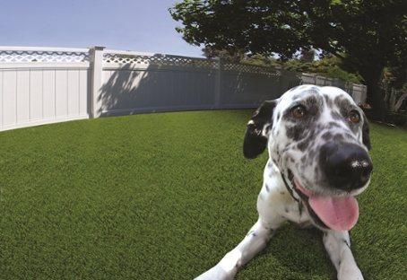 Artificial Turf for Pet Facilities