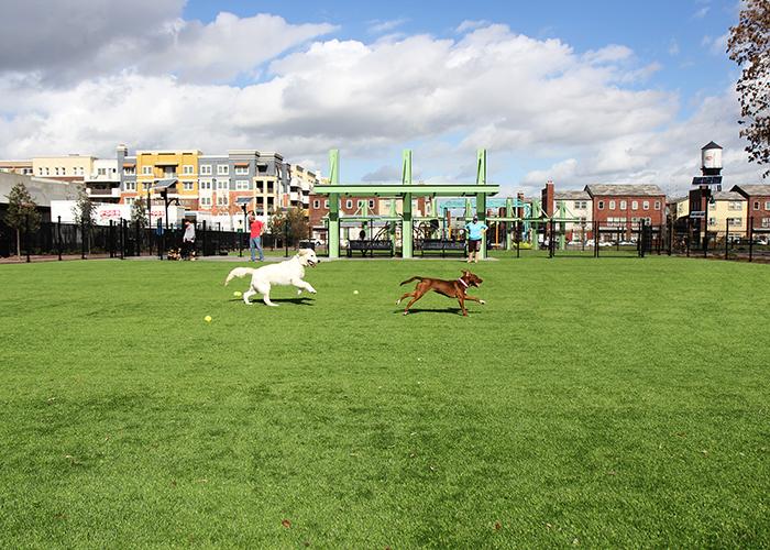 Artificial Grass for Pet Facilities